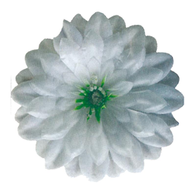 Gerbera alb