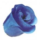 Trandafir boboc albastru