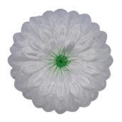 Cerbera albă