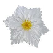 Model 4 alb